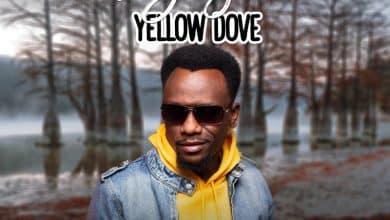 Photo of Yellow Dove – Rejoice
