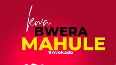 Photo of Avokado – Kwabwera Mahule
